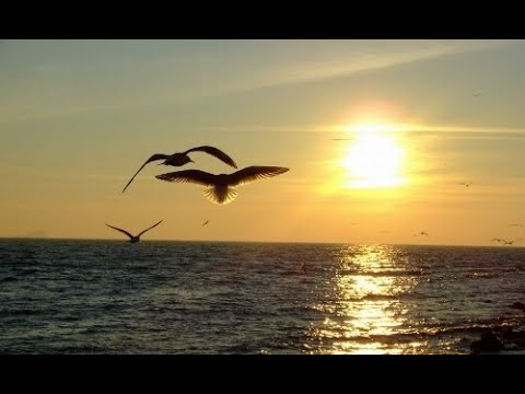 MİRACLES OF LOVE ENDLESS LOVE (Relaxing Music)