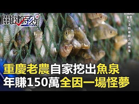 重慶老農自家挖出「魚泉」!!自動噴魚年賺150萬全因一場怪夢… 關鍵時刻 20171109-5 王瑞德 丁學偉 黃世聰