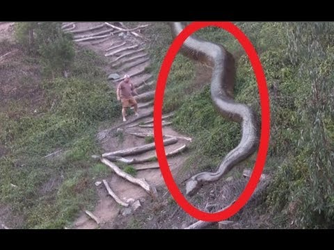 Biggest Snake Ever - YouTube