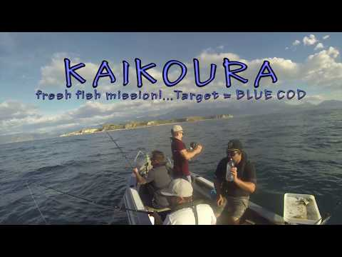 Fishing In Kaikoura - How To Catch A Blue Cod