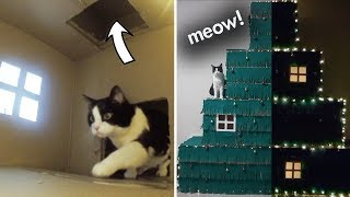 Huge Four Level Christmas Tree – a Maze For The Cat!!