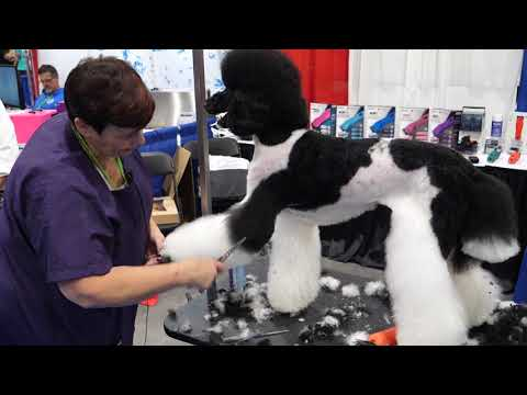 Asian Fusion on a Standard Poodle with Sue Watson