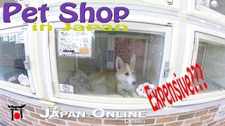 Pet Shop in Japan:  Are the animals expensive?