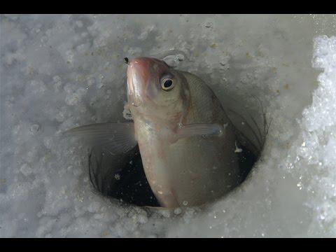 Зимняя рыбалка. Философия зимнего бесклевья. Ловля подлещика в верховьях Волге.