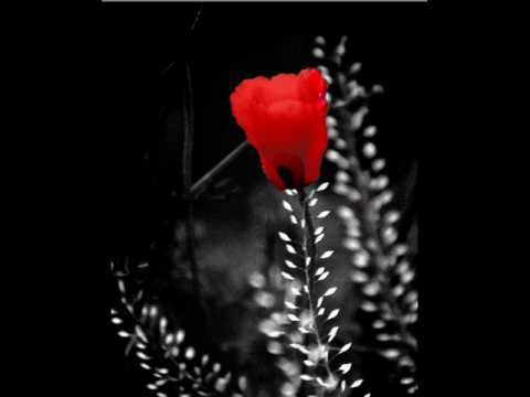 akrep nalan -dağ çiçeği