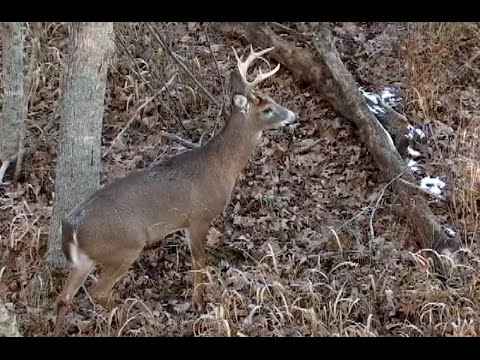 ADAMS COUNTY OHIO DEER - Wade Spencer's Life's Highway TV Show
