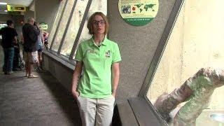 Slow Loris endangered by viral videos