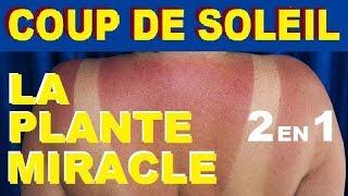 COMMENT CALMER UN COUP DE SOLEIL ? LA PLANTE MIRACLE 2 EN 1 !!  REMEDE NATUREL PAS CHER ET BIO