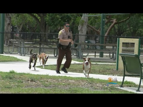 Miami-Dade Police Helping Shelter Dogs Get Exercise, Find New Homes