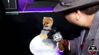 Hilarious! Jiff The Pomeranian Dog Interview At Ea Sports Madden Bowl Xxi Super Bowl Party 2015
