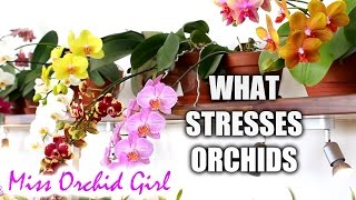 What stresses Orchids - common factors that influence health and growth