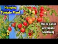 - How to Grow Hanging Tomato Plant in 5 Liter Bottle  Grow Tomatoes on the Wall Vertical Gardening
