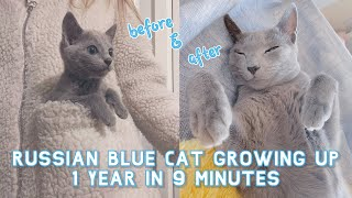 My Russian Blue Cat growing up | 1 Year in 9 Minutes