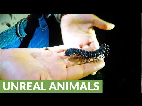 Amazon night hikers meet fascinating and terrifying creatures