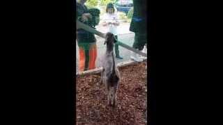 あまりにも酷過ぎる飼育放棄 Animal Neglect【プードルのボランティア・トリミング④】 thumbnail