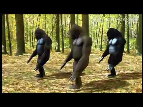 I got it from my daddy-- Dancing Gorilla's