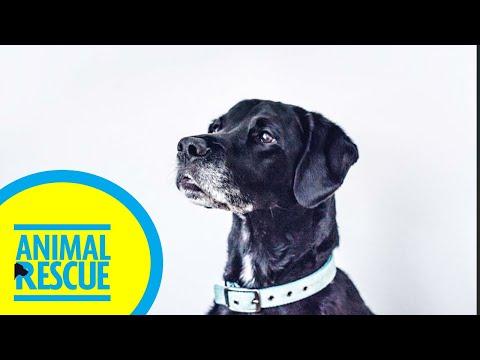 Animal Rescue - Season 2, Episode 10