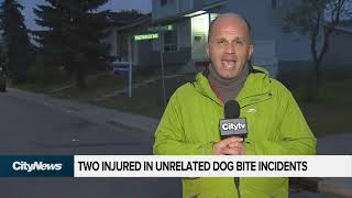 Two injured in unrelated dog bite incidents