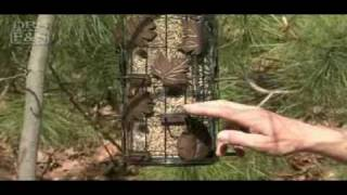 Squirrel Be-gone Iii Triple Tube Bird Feeder | Drsfostersmith.com