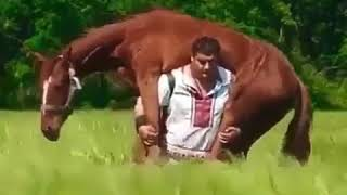 Very strong man taking a Horse on his back