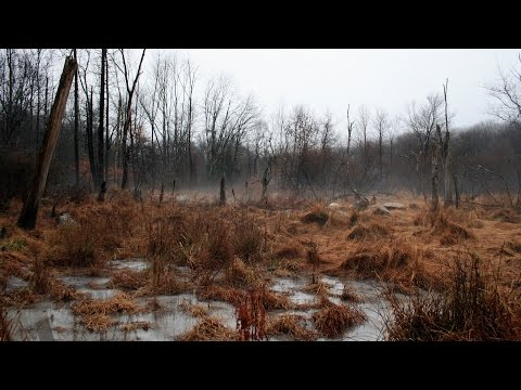 Hunting The Rut In Scape Ore Swamp! 11-24-2015