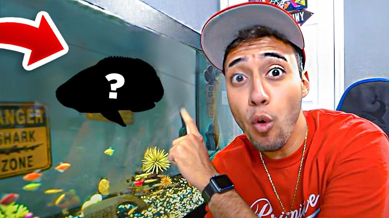 Não acredito que meu peixe monstro ja está desse tamanho...
