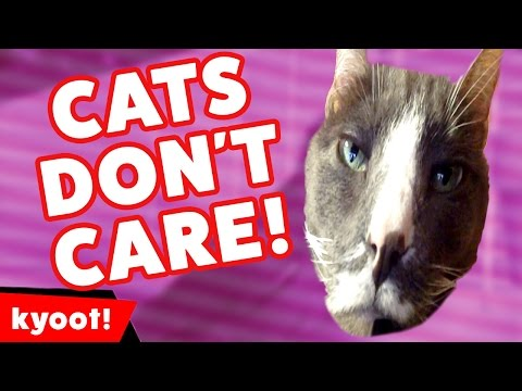 Funniest Cats Don't Care Compilation of 2016 | Kyoot Animals