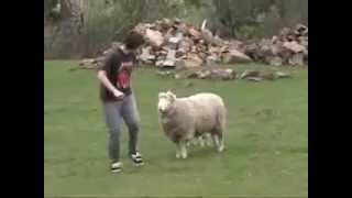 Lucas Mac Sheep Attack