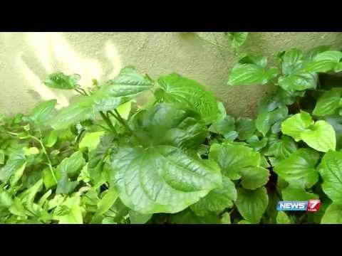 Easy-grow thippili herbal plant cures respiratory problems | Poovali | News7 Tamil |