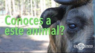 Habías visto a este animal antes? - Bután #2