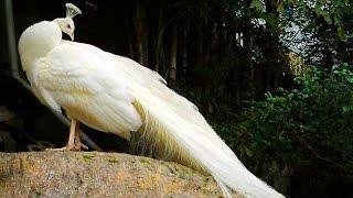Cute ZOO animals & birds - Зоопарк - животные и птицы