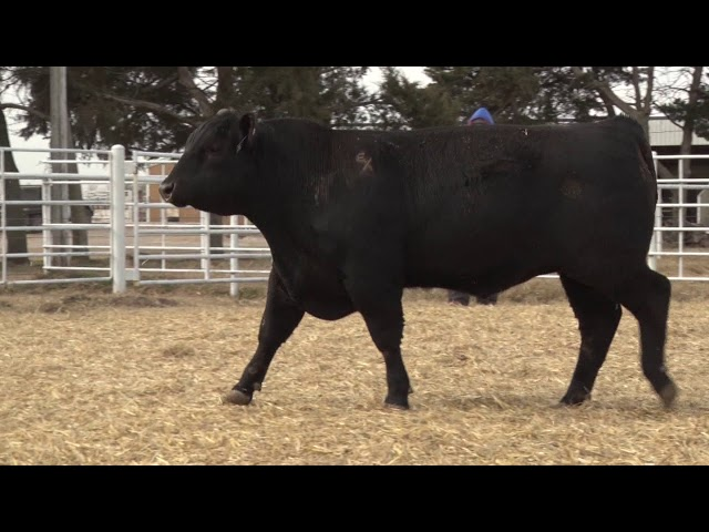 Express Ranches Lot 442