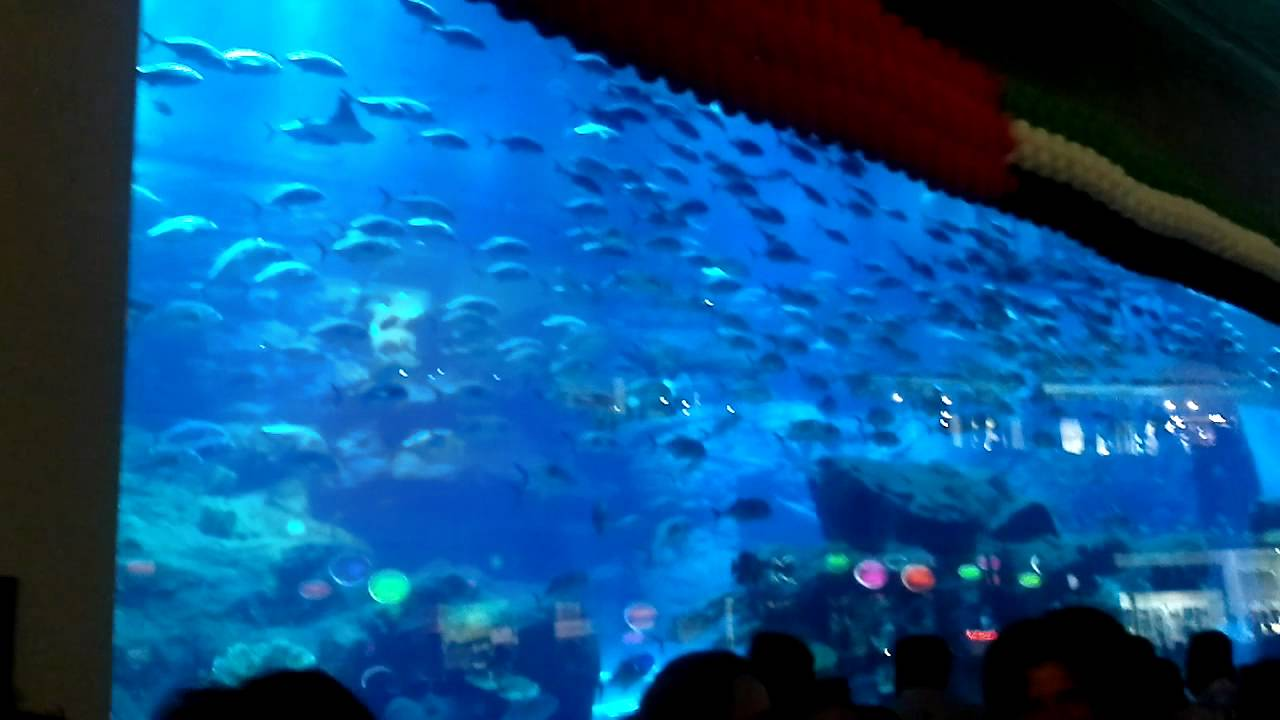 The worlds largest Aquarium in my views from Dubai Mall
