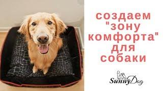 """Создаем  """"Зону комфорта"""" для собаки"""
