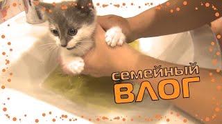 видео Кормление новорожденных котят, чем их кормить и как