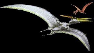 fighting dinosaurs flying dinosaurs skeleton pteranodon vs dsungaripterus