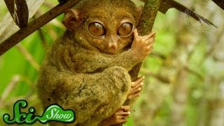 The World's 5 Rarest Animals