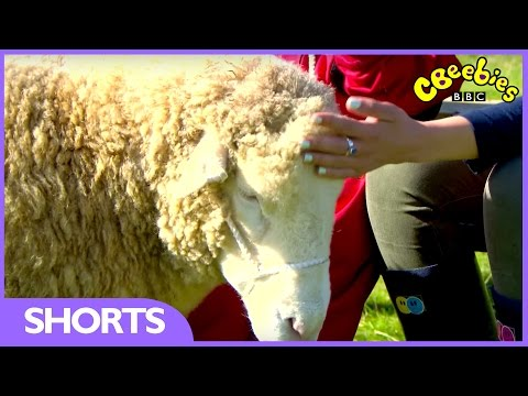 CBeebies | My Pet And Me | Sheep