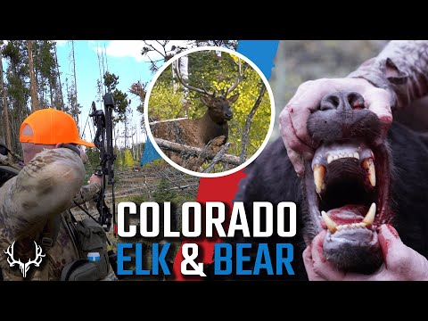 Colorado OTC Archery Elk and Bear Hunt