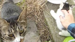 親猫の前で子猫を撫でまくった結果www thumbnail