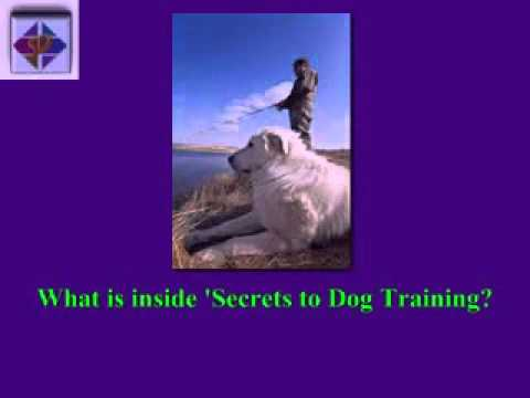 secret-to-dog-training