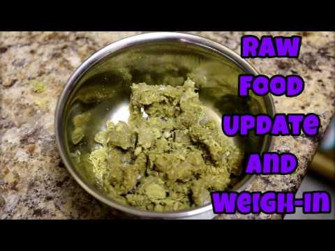 Ferret Raw Food Update & Weigh-In - Ferret Care VOL. 4