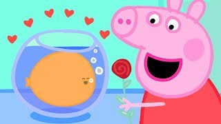 Peppa Pig Official Channel ❤️ Peppa Loves Goldies the Fish - Valentine's Special