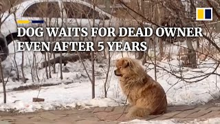 Dog in China waits for its dead owner even after five years