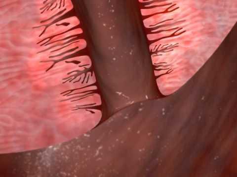 Vid of cervix during sex