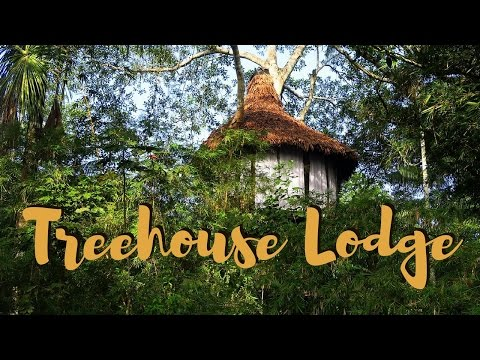Jungle Treehouse adventure in the Amazon rainforest, Peru
