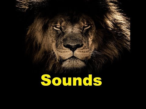 Lion Sound Effects All Sounds