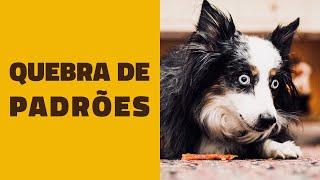 Como quebrar PADRÕES DE COMPORTAMENTO dos cães