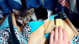 Сон котят