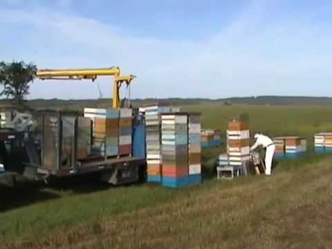перевозка пчёл